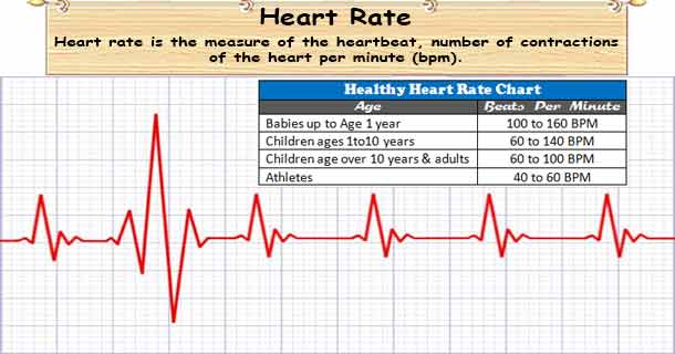 Heart rate what factors determine your heart rate