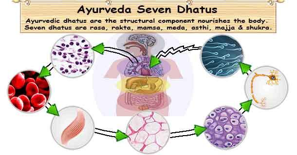 Ayurveda Seven Dhatus