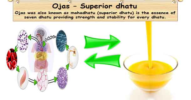 Ojas - Mahadhatu or Superior dhatu