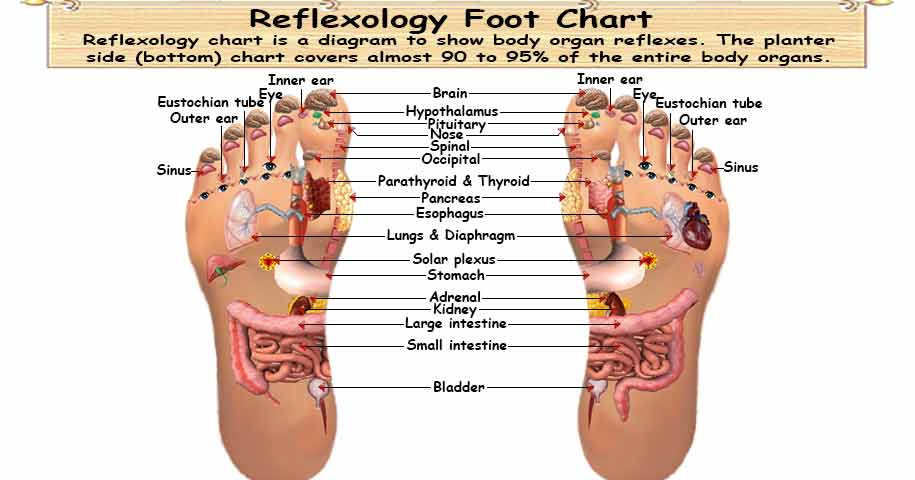 foot chart: Foot reflexology chart planter dorsal medial lateral map