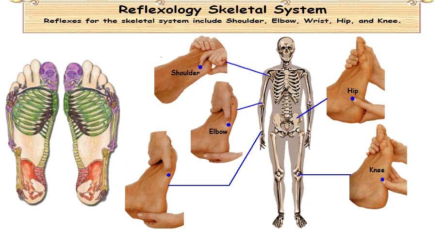 Reflexology Skeletal System 5 Sturdy Reflexes Strong Skeletal