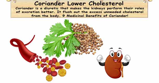 Coriander May Help Lower Cholesterol