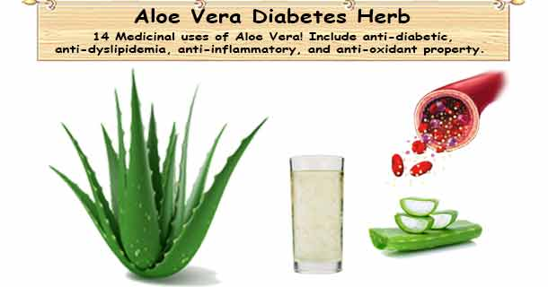 Herb Aloe Vera