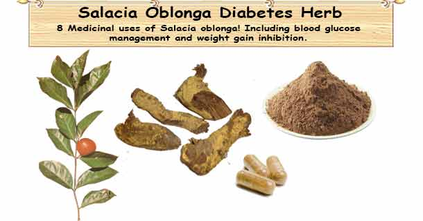 Salacia Oblonga Uses Dosage Side Effects 8 Medicinal Uses Salacia