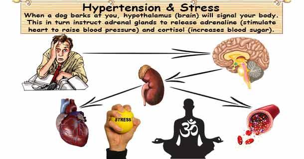Hypertension & Stress