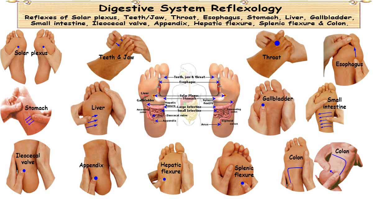 Reflexology Digestive System 16 Reflexes To Strengthen Digestion