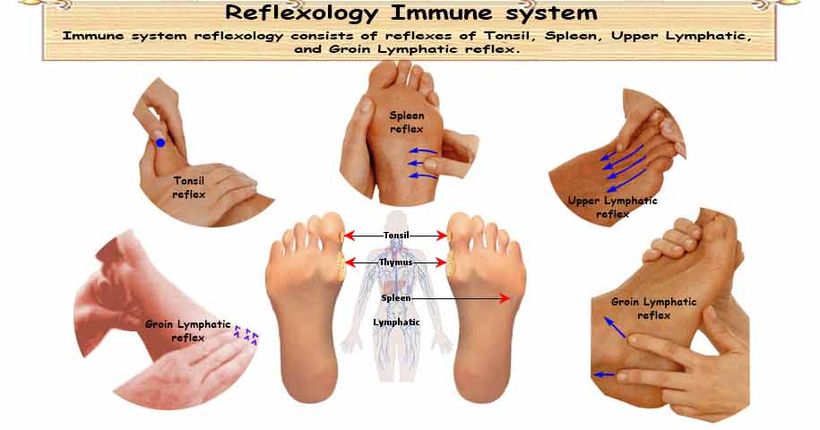 Reflexology Immune system