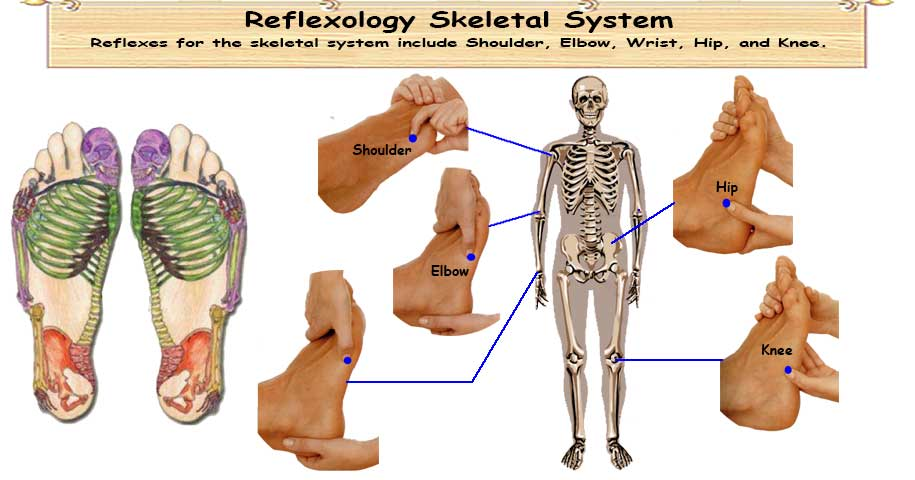 Reflexology Skeletal System Healthy Ojas