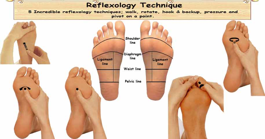 Reflexology Terms Techniques on where are your pancreas located
